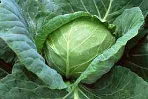 Простые салаты. Рецепты салатов из капусты.